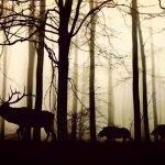 come-difenderci-dagli-animali-nel-bosco