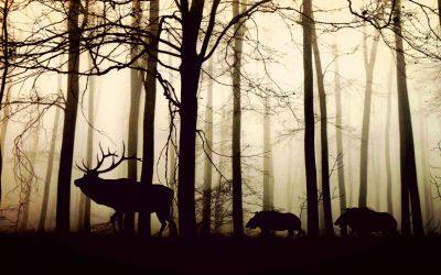 Difendersi da animali selvatici nel bosco