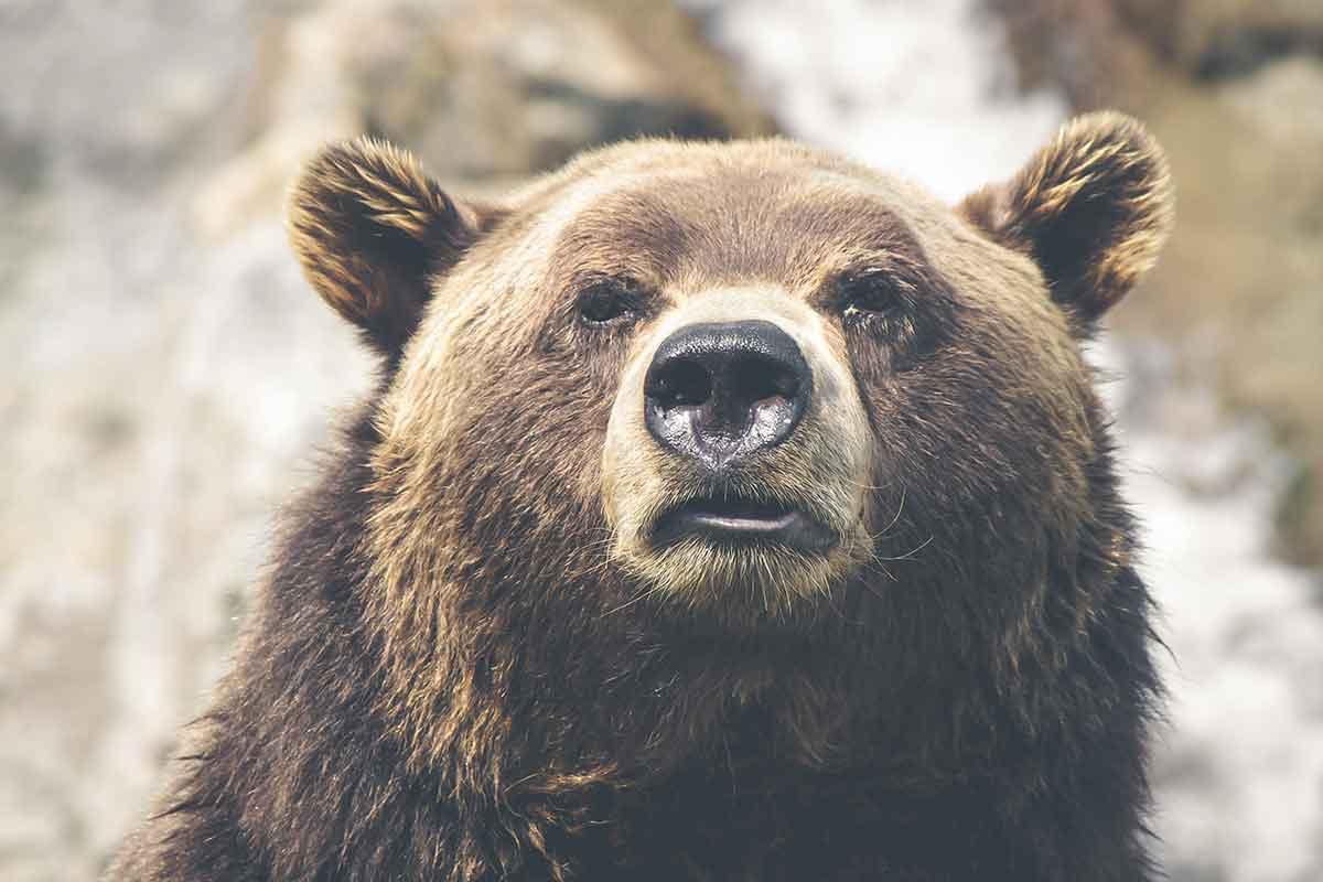 difendersi-da-un-orso